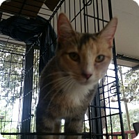 Adopt A Pet :: Ashley - Mims, FL