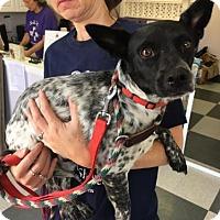 Adopt A Pet :: Pepper - Island Heights, NJ
