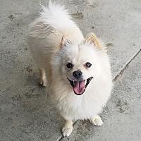 Adopt A Pet :: HAAS - Gustine, CA