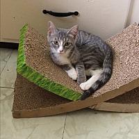 Adopt A Pet :: Kylie - Salem, OH