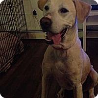 Adopt A Pet :: Frosty - Spring City, PA