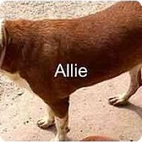 Adopt A Pet :: Allie,FL - Miami Beach, FL