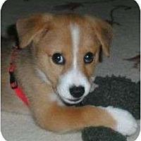 Adopt A Pet :: Kirby - Plainfield, CT