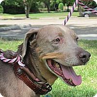 Adopt A Pet :: Maggie May - Kingwood, TX