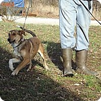 Adopt A Pet :: Cinderella - Danbury, CT