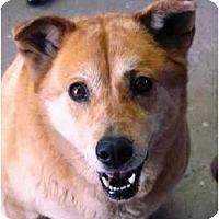 Adopt A Pet :: Izzy - YERINGTON, NV