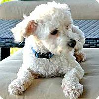 Adopt A Pet :: ARCHIE - Salt Lake City, UT