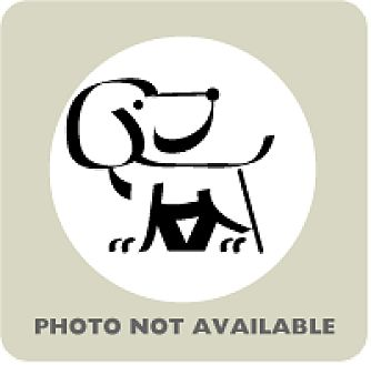 Coonhound/Labrador Retriever Mix Puppy for adoption in Janesville, Wisconsin - Savannah