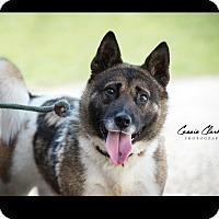 Adopt A Pet :: Cortez - RESCUED! - Zanesville, OH