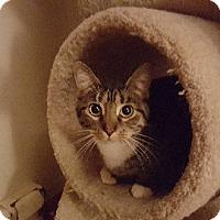 Adopt A Pet :: Pepper - AUR, IL