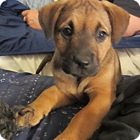 Adopt A Pet :: Sloane - Bowie, MD