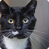 Adopt A Pet :: Laz - Scituate, MA