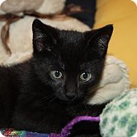 Adopt A Pet :: Colt (LE) - Little Falls, NJ