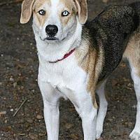 Adopt A Pet :: Hope - Sarasota, FL