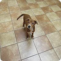 Adopt A Pet :: Lenny *Petsmart GB* - Appleton, WI