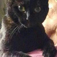 Adopt A Pet :: Josie - O'Fallon, MO