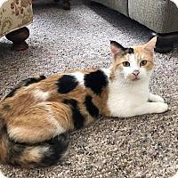 Adopt A Pet :: Merryweather - Wichita, KS