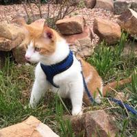 Adopt A Pet :: Michael - Denver, CO