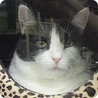 Adopt A Pet :: JOY - Diamond Bar, CA