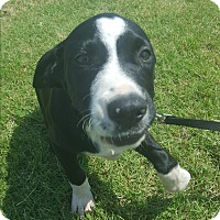 Adopt A Pet :: Oswald - Weatherford, TX