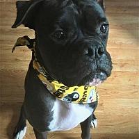 Adopt A Pet :: Keisel - Hurst, TX