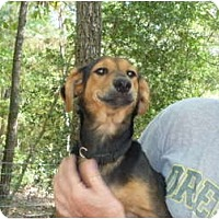 Adopt A Pet :: Woody - Pointblank, TX