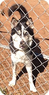 Husky Mix Dog for adoption in East Hartford, Connecticut - Baby girl in CT
