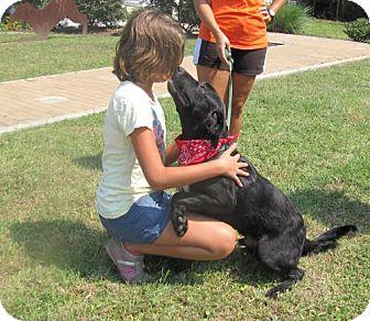 Labrador Retriever Mix Dog for adoption in Port St. Joe, Florida - Landon