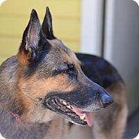 Adopt A Pet :: Gigi - Green Cove Springs, FL