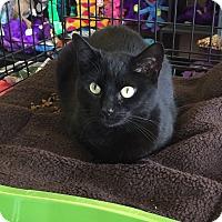 Adopt A Pet :: Onyx - Horsham, PA