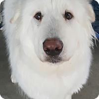 Adopt A Pet :: Seamus - Apple valley, CA