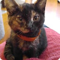 Adopt A Pet :: Pixie - Manchester, CT