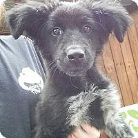 Adopt A Pet :: Havanna - Gainesville, FL