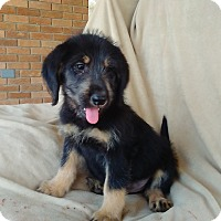 Adopt A Pet :: Crystal-in CT - Manchester, CT