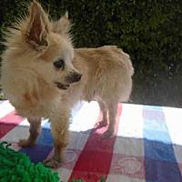 Adopt A Pet :: COLE ~ PICK ME! - Fairfield, CA