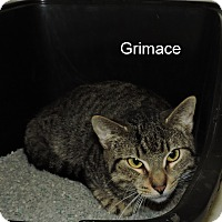 Adopt A Pet :: Grimace - Slidell, LA