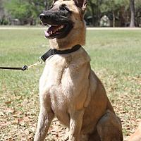 Adopt A Pet :: George - Odessa, FL