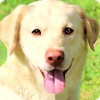 Adopt A Pet :: FARGO(GORGEOUS!!!  WOW! - Wakefield, RI