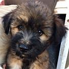 Adopt A Pet :: Chichibu