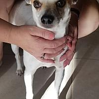 Adopt A Pet :: PeeWee - Chiefland, FL