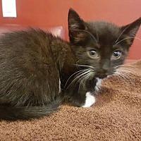 Adopt A Pet :: Ramona - Toms River, NJ