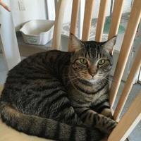 Adopt A Pet :: Spanky - Brooksville, FL