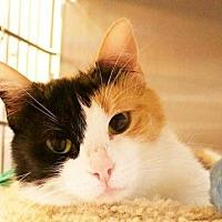 Adopt A Pet :: Emily - Frisco, TX