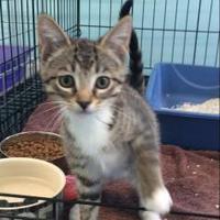 Adopt A Pet :: Leo - Lincoln, MI