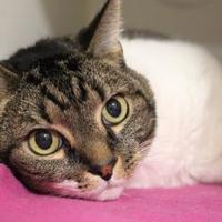 Adopt A Pet :: Andy 2 - Venice, FL