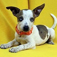 Adopt A Pet :: Etta - Westminster, CO