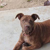 Adopt A Pet :: April - Broken Arrow, OK