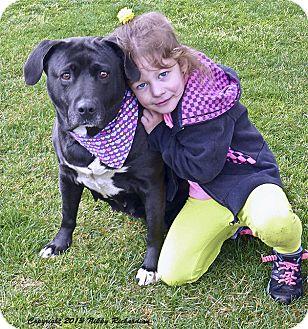 Labrador Retriever/American Bulldog Mix Dog for adoption in Sacramento, California - Jackie Urgent HELP