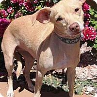 Adopt A Pet :: Vitalia - Gilbert, AZ