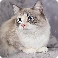 Adopt A Pet :: Kiwi - Eagan, MN